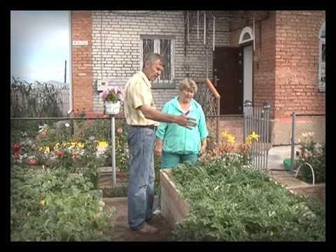 Во саду ли, в огороде. Выпуск 3 октября