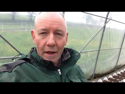 Das Mittel gegen die Würmer für den Welpen jene-terjera