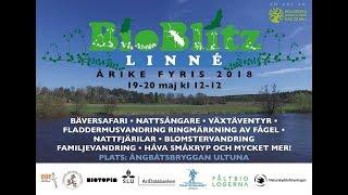 Bioblitz Linné 11:40   Kholo.pk