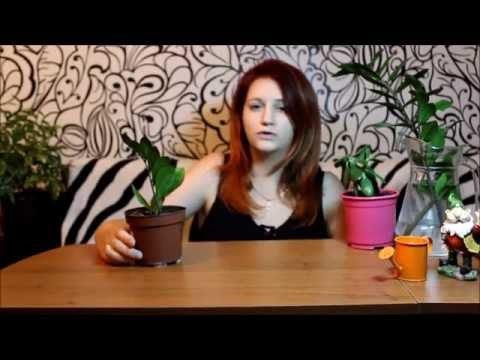 Процедура счастье для волос санкт-петербург