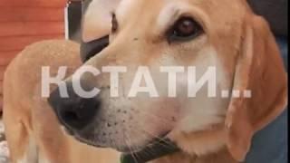 Нижний Новгород стал локомотивом в принятии закона об обращении с животными