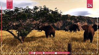 الاتجار بالعاج يهدد بانقراض الفيل الإفريقي
