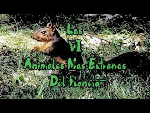 Los 6 Animales Mas Extraños Del Planeta | Deimoss