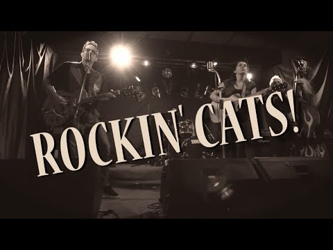 Rockin' Cats Rockabilly anni '50 con stile! Como musiqua.it