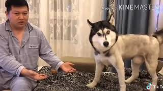 Funny and cute animals