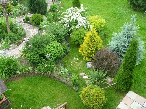 Хвойные растения для дачи