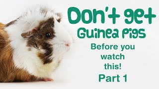 10 Things You Need To Know BEFORE GETTING GUINEA PIGS - Part 1