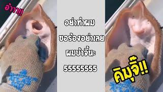 หน้าตาแบบนี้คงจะฟินสินะ เล่นกับกระเบนอย่างงี้ก็ได้หรอ!!... #รวมคลิปฮาพากย์ไทย
