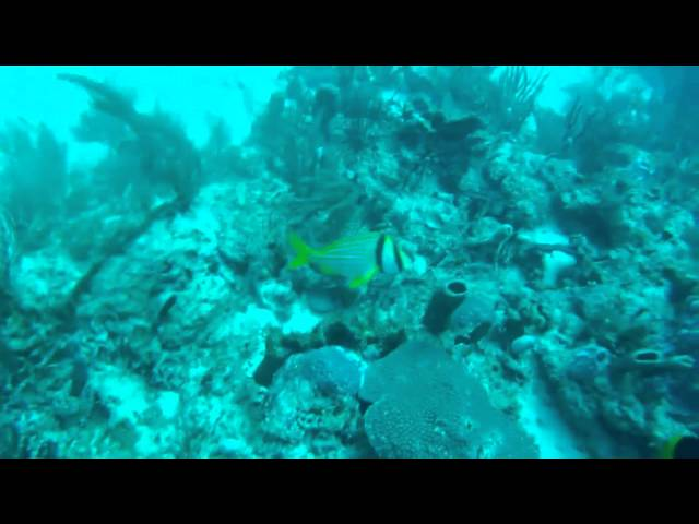 100 ft.reef dive off Boynton Beach, Florida UFO uncovered