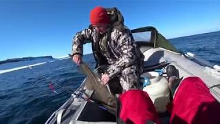 Начало рыбалка на кольском полуострове форум