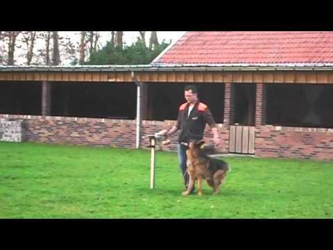 IPO training duitse herder.
