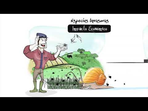 Vídeo para Videoscribing by Primera Plana para Especies Invasoras