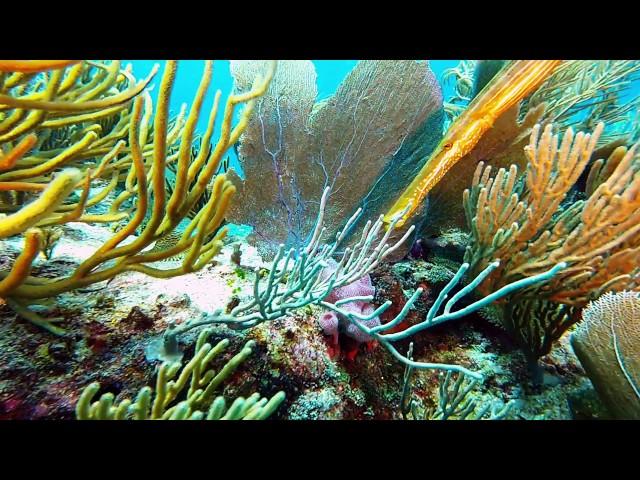 Barracuda Reef, Scuba Diving, Playa Del Carmen, Mexico