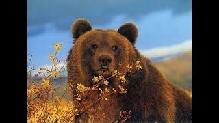Полярный медведь. Жестокое Выживание Полярного Медведя - Документальный фильм