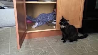 приколы про котов.смешные коты!!))