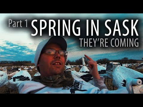 spring-in-sask--snow-goose-hunting-in-canada--part-1