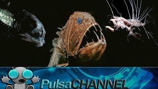TOP 10 Animales Abisales    || Criaturas de las profundidades ||