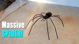 BIGGEST SPIDER EVER?! | Kholo.pk