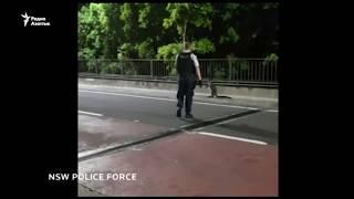 В Сиднее полиция устроила погоню за кенгуру