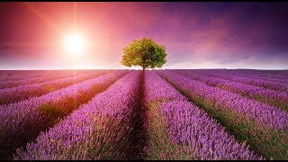 """Peaceful Music, Relaxing Music, Instrumental Music """"In Quiet Fields"""