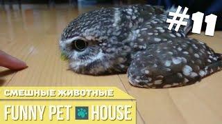 СМЕШНЫЕ ЖИВОТНЫЕ И ПИТОМЦЫ #11 СЕНТЯБРЬ 2018 [Funny Pet House] Смешные животные