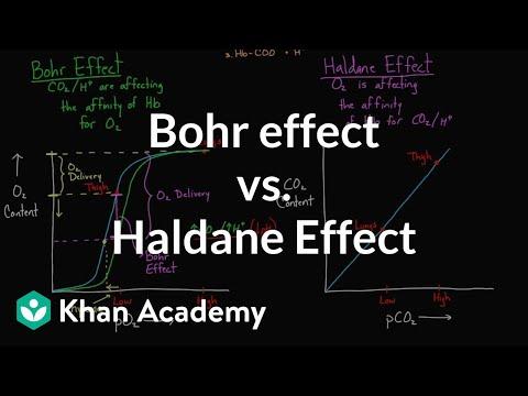 Bohr effect vs Haldane effect (video) Khan Academy