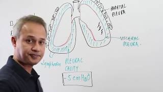 Overview of The Pleural Cavity