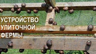 Улиточная ферма Сергея Балаева. Устройство улиточной фермы. Брудер для улиток.