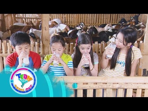 DV Boer Farm - Goat House   Team Yey Timeout
