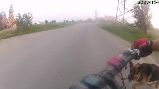 Нападение собаки на велосипедиста