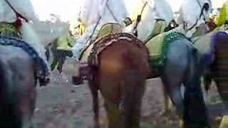 preview picture of video 'Festival of horses in youssoufia city Morocco'
