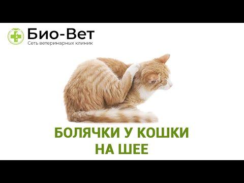 Болячки у кошки на шее. Ветеринарная клиника Био-Вет.