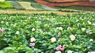 Bronski beat  - The potatoe fields