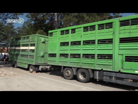 100 junica za poljoprivrednike u istočnoj Hercegovini