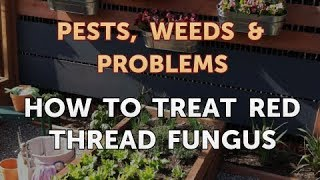 How to Treat Red Thread Fungus