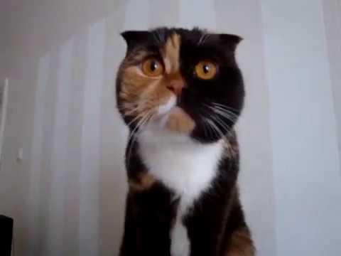 Paf83 - Кошка смотрит телевизор 1 марта 2013г