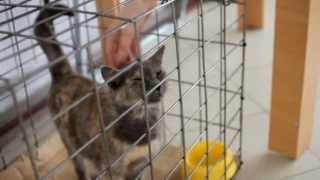 """""""ЯрКот"""" - благотворительный фонд помощи бездомным животным"""