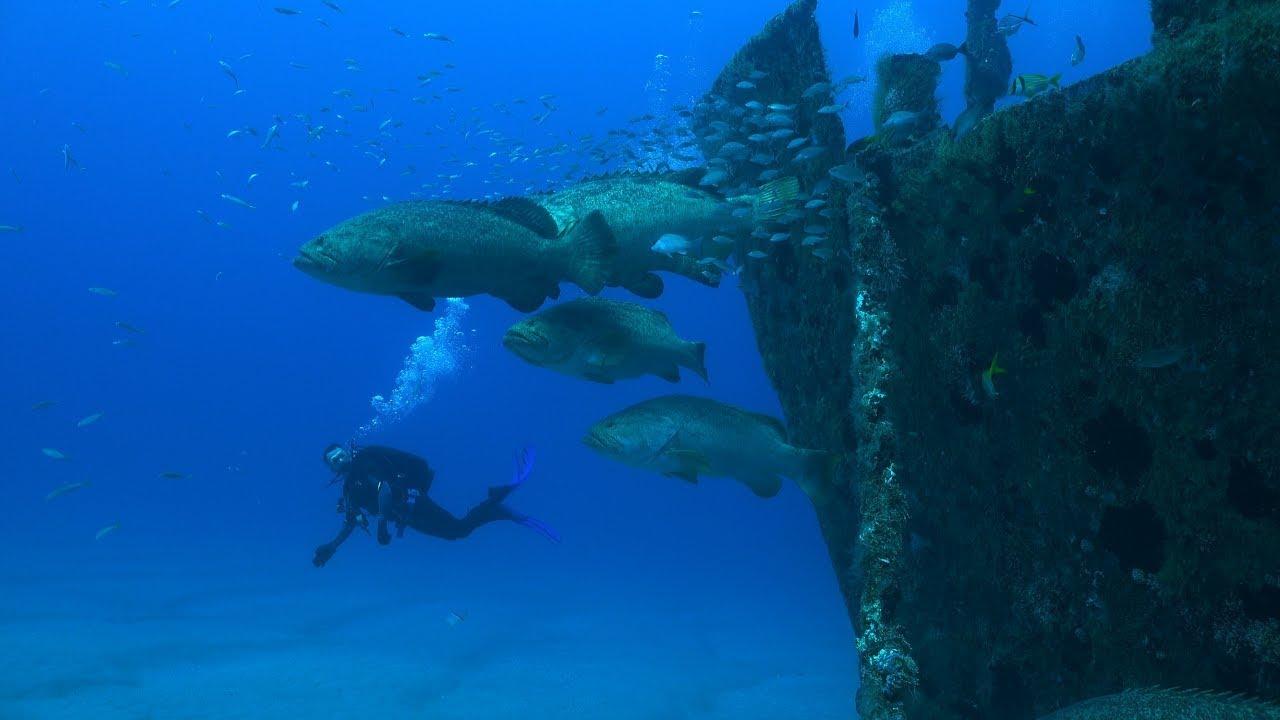 Florida Travel: Why You Should Dive Florida's Treasure Coast