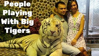 Playing with big Tigers
