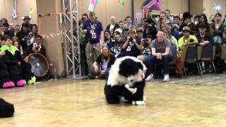 Axton - BLFC 2014 Fursuit Dance Competition