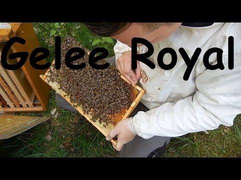 Gelee Royal essen kostbares aus dem Bienenvolk