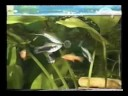 Шпагат при сколиозе