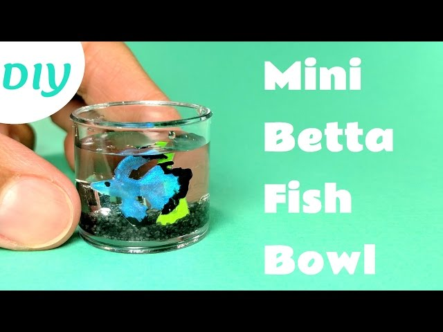 DIY Miniature Betta Fish Bowl