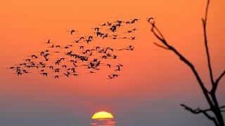 Franco Battiato - Gli Uccelli