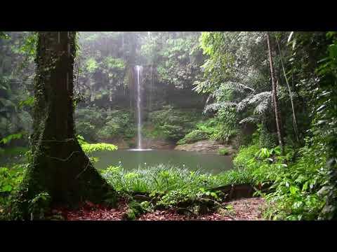 Natur Meditation   Regenwald Sounds und Regen
