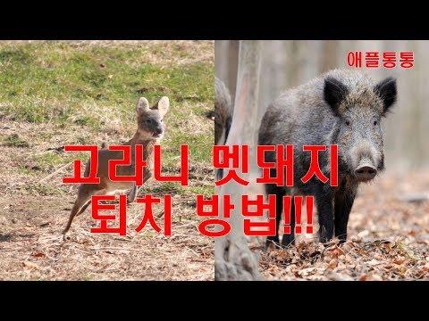 멧돼지 고라니 야생동물 퇴치 방지망 이렇게 설치하면 최고!! 각종 방지망 비교