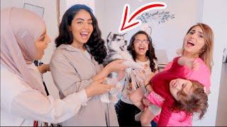 كلب عصابة بدر هجم على ميلا !! تحميل MP3
