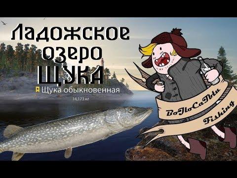 Русская Рыбалка 4 - Ладога - Щука
