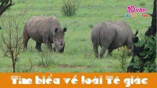preview picture of video 'Động vật có vú: Tê giác (10 vạn câu hỏi vì sao)'