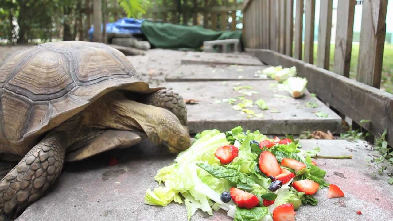 Time-Lapse Tortoise Absolutely Murders Salads